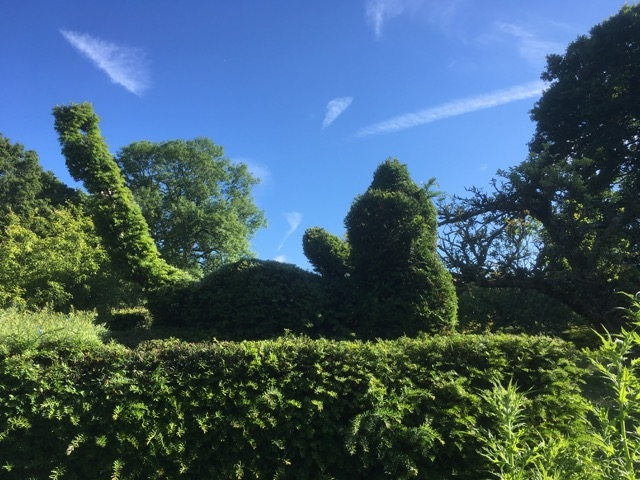 Topiary-mouse-has-just-had-a-hair-cut